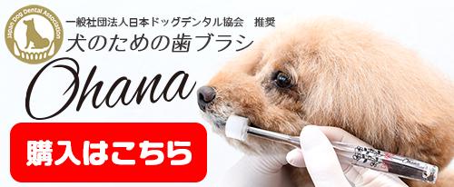 犬のための歯ブラシの購入はこちら